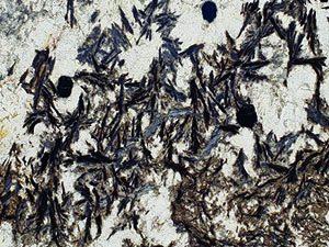 Super Delicatus granite slab